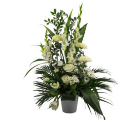 Arrangement Perle blanche