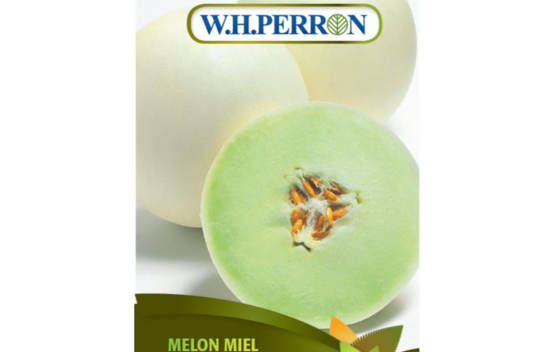 Melon Miel Honeycomb