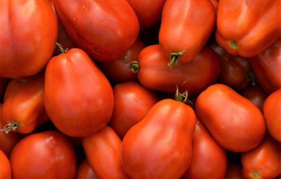 Tomate Roma Biologique (Tomate Italienne)