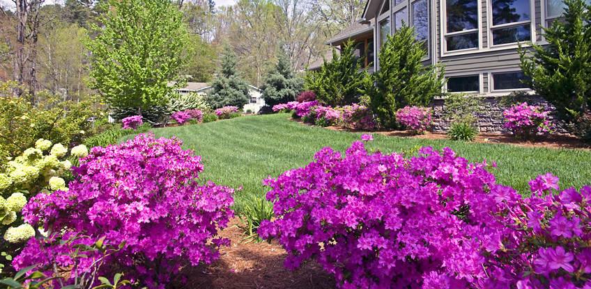 arbustes floralies jouvence. Black Bedroom Furniture Sets. Home Design Ideas